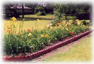 rollover pictures of Hem Haven Daylilies display beds located in Fairhope, Alabama